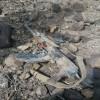 اول صور تظهر خسائر الحوثيين في معاركهم مع قوات الحرس الجمهوري