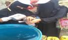 مدير برنامج مكافحة الملاريا بلحج: حملات الرش مستمرة لمكافحة الضنك وتم تدريب 40 متتطوعة في مديرية الحوطة