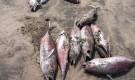 تقرير : ثروات مهدورة على ساحل أبين وجهات مختصة غير معذورة