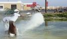 إنتقالي غيل باوزير يواصل حملة رش مادة الجير في أماكن تكاثر البعوض
