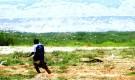 فيما يغزوا الجراد الصحراوي مزارع وادي حضرموت ..المزارعين يناشدون الجهات المختصة انقاذ محاصيلهم